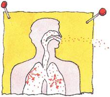 image of lungs inhaling radon
